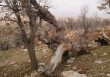 Something is killing off oak trees in Zagros mountains